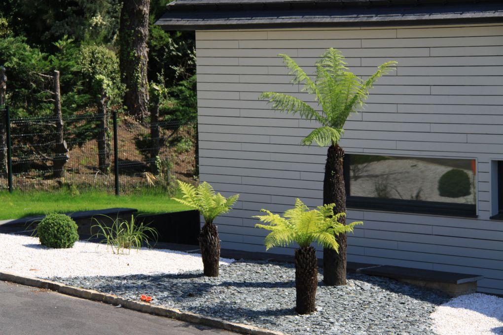 Arbor minéral paysagiste à Vannes rayonne dans le golfe du morbihan (56) Auray, Arradon, Baden, Larmor Baden, Séné, Theix, Elven, St avé, st nolff. Les fougères arborescentes sont originaires d'Australie (Tasmanie)