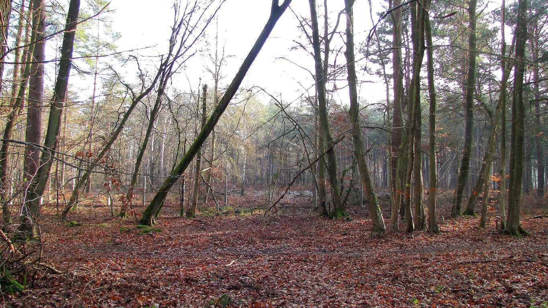 carrefour_Route de la Plaine des Maréchal_Chemin long du Parc d'Offémont