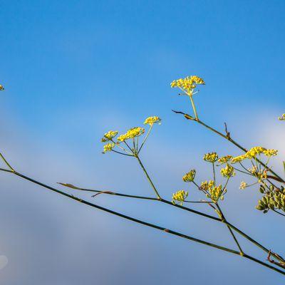végétation d'automne en contre plongée