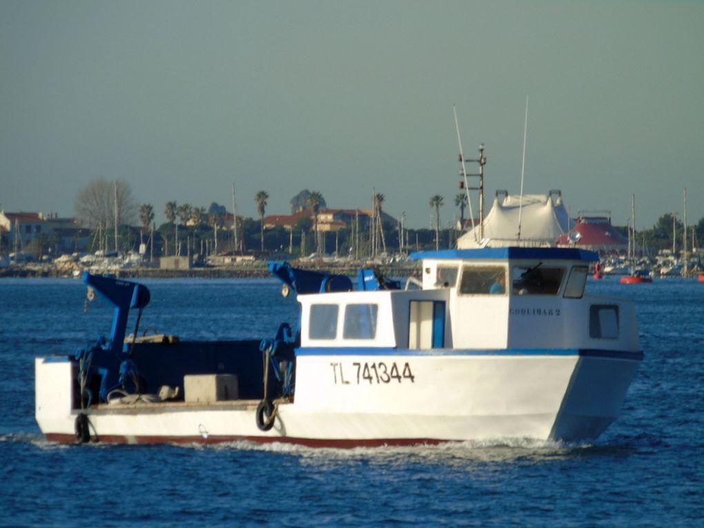 COQUIMAR II  TL741344 , en petite rade de Toulon le 08 mars 2017