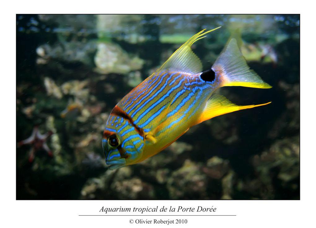 Quelques poissons croisé dans l'aquarium de la porte Dorée