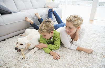 How to Deal with Mould at Home?