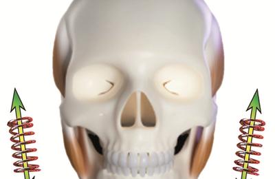 Conséquence d'une biomécanique perturbée de la mâchoire ?
