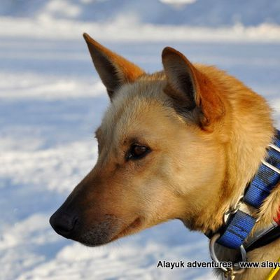 Le chien de la semaine - The Dog of The Week - ARKELL