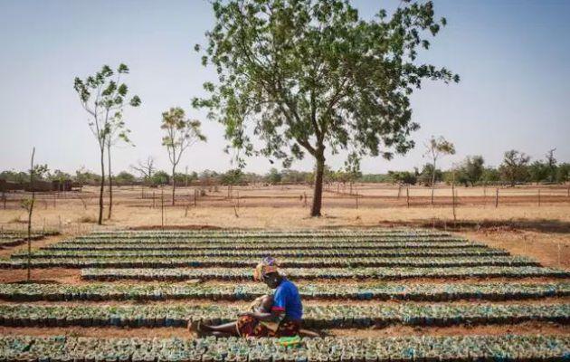Face à la désertification, faire revivre les terres perdues du Burkina Faso