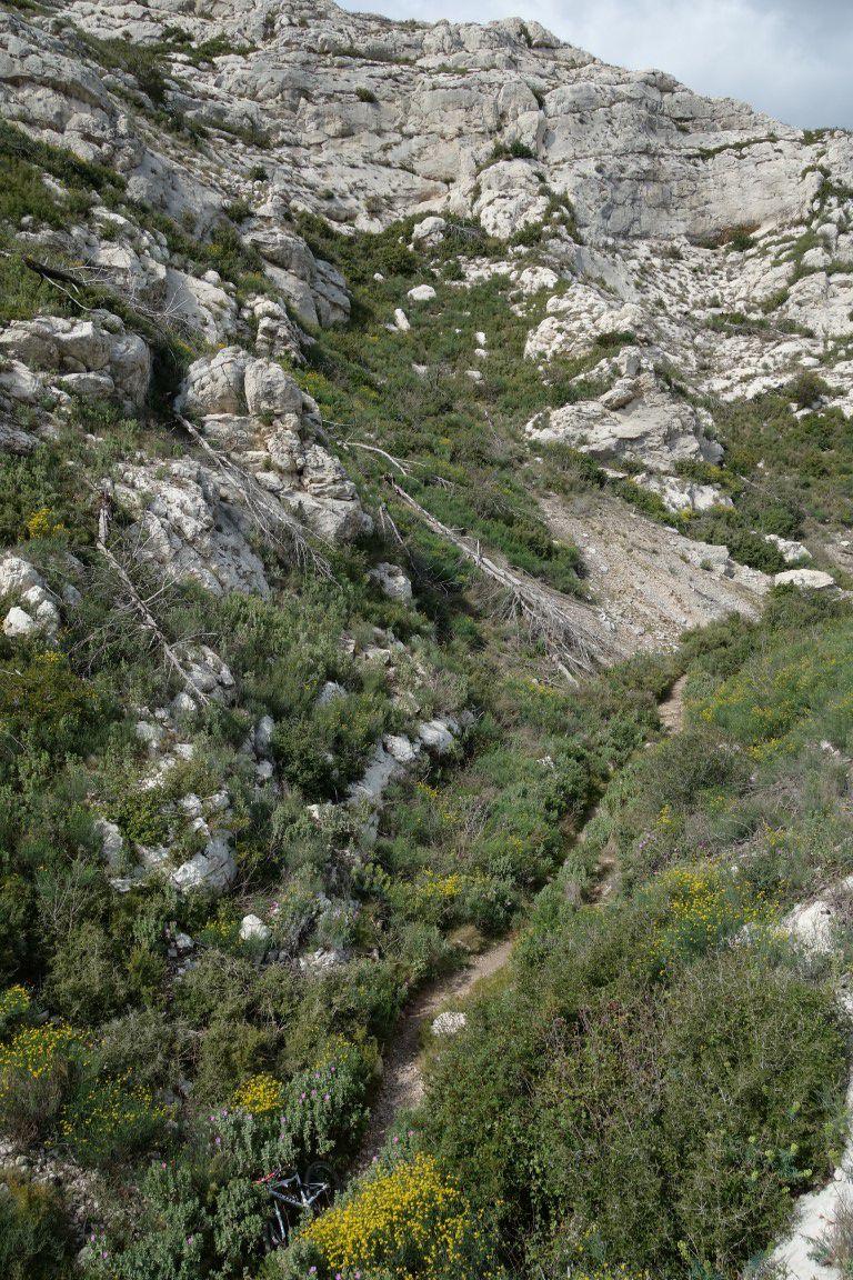 dans le plus long single de la côte bleue, le fond du vallon du Bon Jean et son début de floraison des coronilles et cistes
