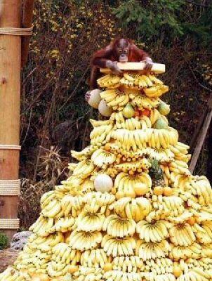 Un sapin en fruits exotiques