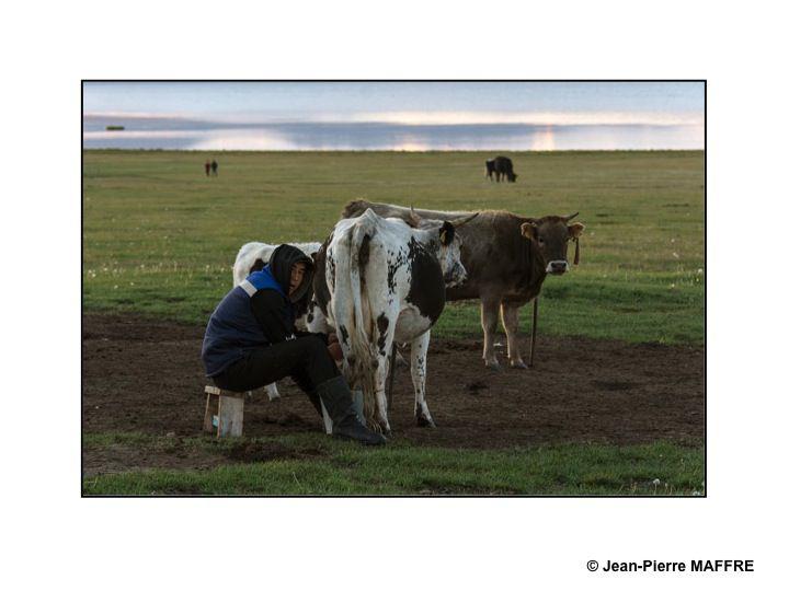 Vaches et chevaux sont au cœur de la vie paysanne dans les campagnes kirghizes.