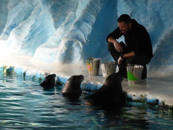 """...l'attraction principale ...les phoques dont deux """"barbus""""..."""