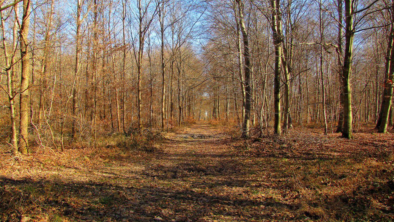 Randonnée en Forêt de Compiègne__Tournantes sur le Voliard et sur la Fortelle_chaussée Brunehaut