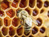 Du plastique dans le miel