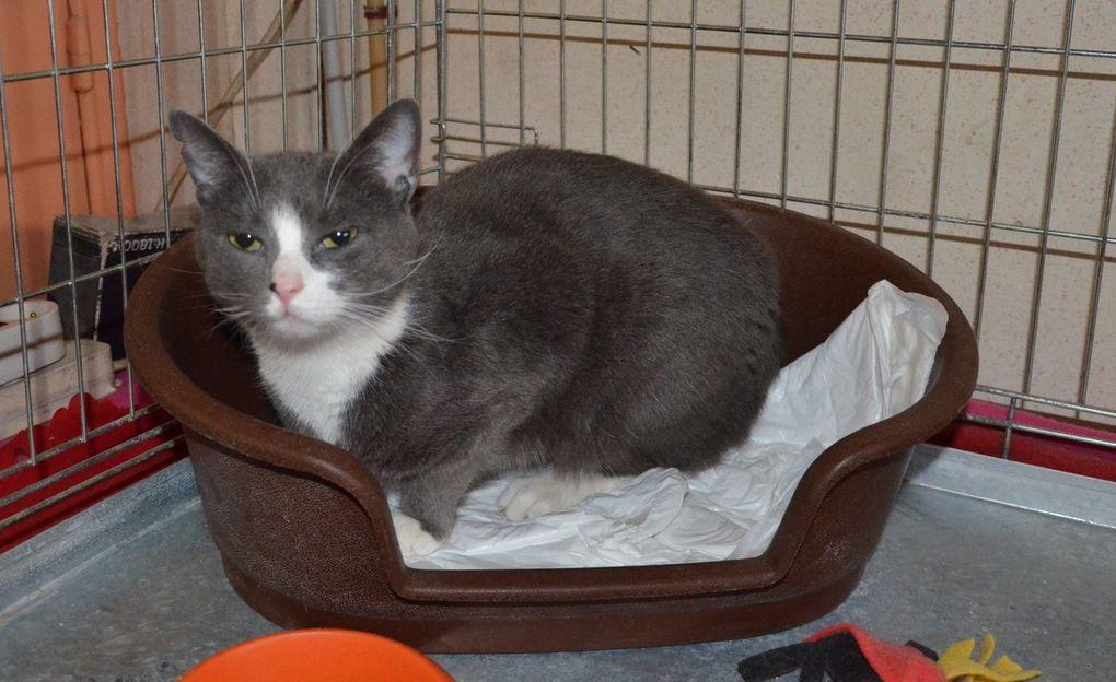 Elle est adoptée !!!  : DOTTY, chatte stérilisée née été 2016 - en socialisation