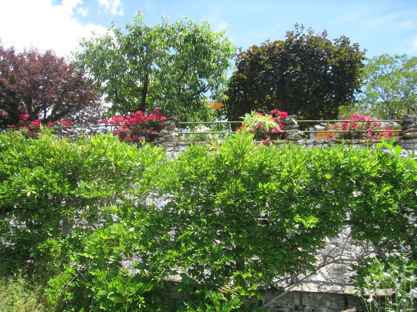 ... et des géraniums. Tout est bien fleuri en cette saison.