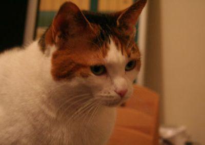 Récupération d'une petite chatte avant son euthanasie
