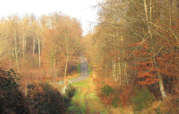 carrefour_Route de la Belle Assise_Sentier (parcelle 168)