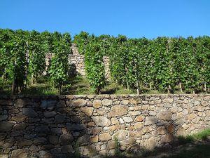 Vino Passion: Oenotourisme  AOP Condrieu & AOP Côte-Rôtie.
