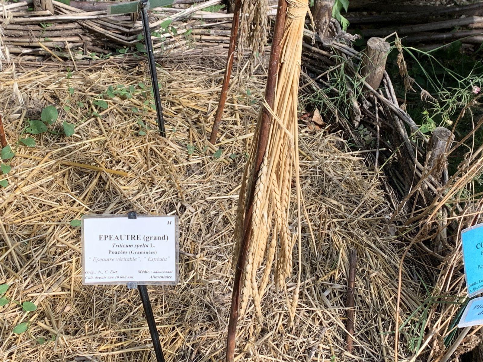 """Une visite dans un"""" jardin des simples"""", à Uzes"""