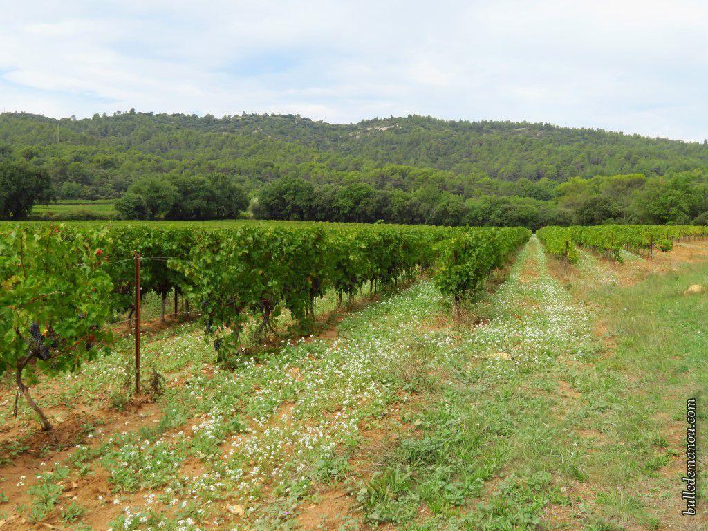 Quelques-uns des vignobles
