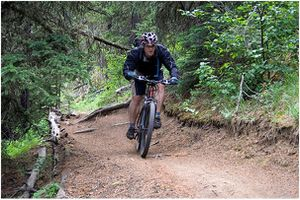 10 TOP UK FORESTS FOR CYCLING