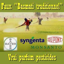 Faux « Basmati traditionnel » parfumé aux pesticides : 90% de ce qu'on trouve en magasin !