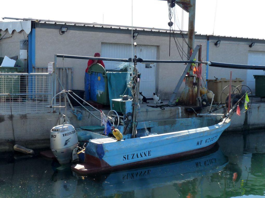 SUZANNE , MT 671279 , dans le port de Saint Gervais a Fos sur Mer le 08 juin 2016