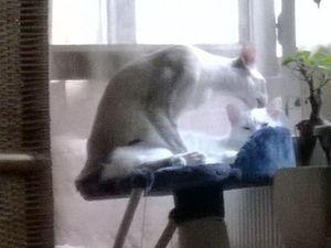 Attention aux jeux arbre a chat qui peuvent être mortel