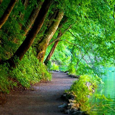 Nature - Chemin - Arbres - Lac - Photographie - Wallpaper - Free