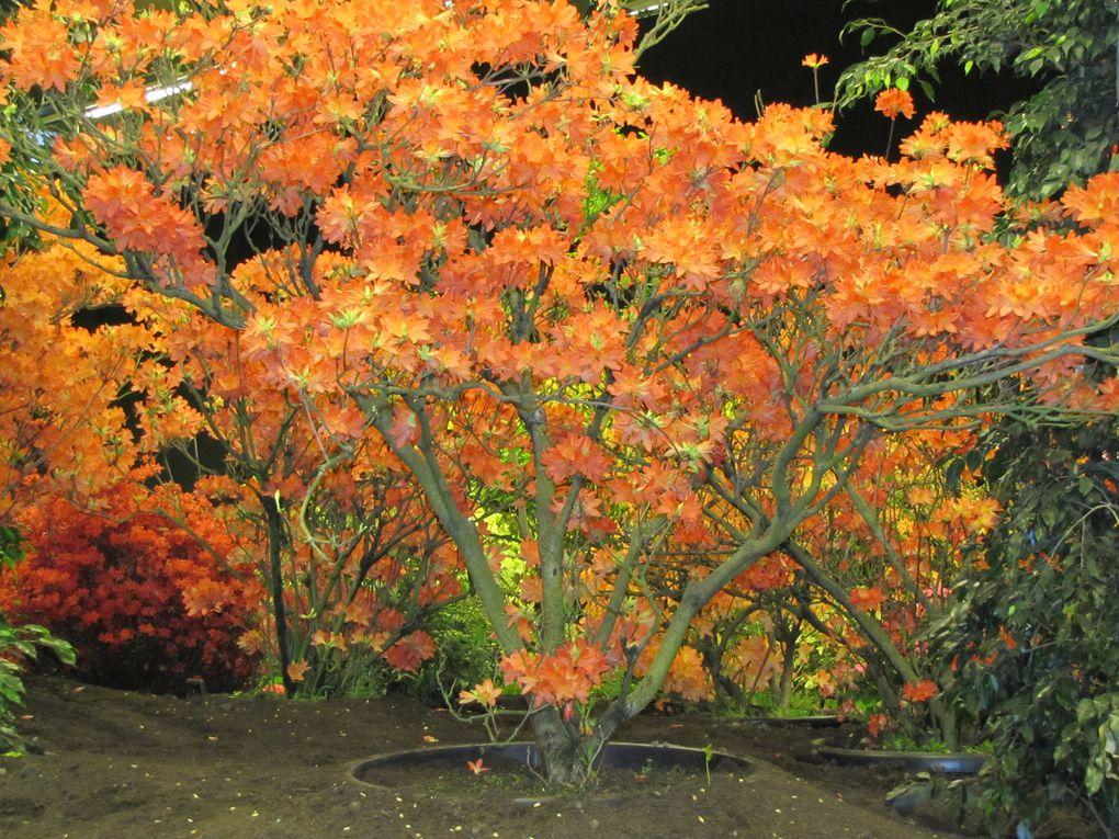 Album - Floralies Gantoises