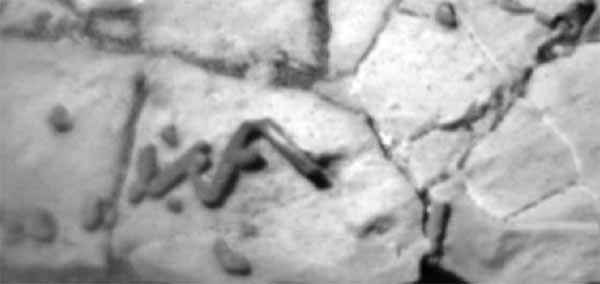 Des traces de fossiles sur Mars ? PHOTOS