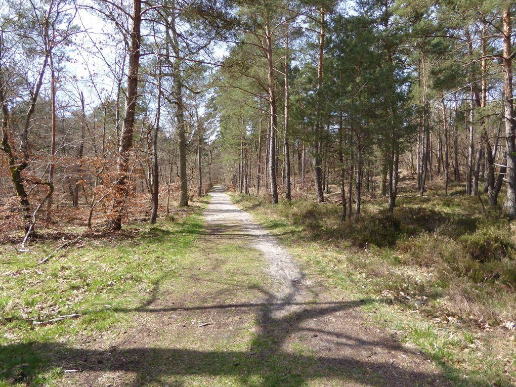 Randonnée à Fontainebleau 15,4 km - 2/2