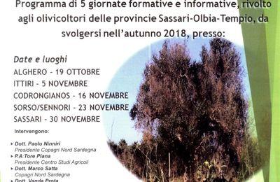 La Copagri Nord Sardegna dalla parte degli olivicoltori per prevenire la XYLELLA FASTIDIOSA. Avviato un programma di Formazione ed Informazione sul batterio.