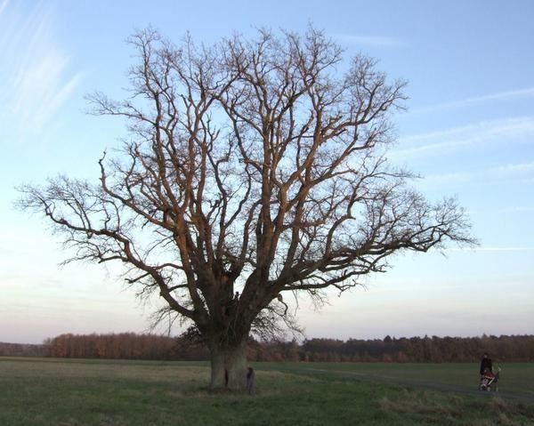 Ces arbres qui habillent nos paysages !