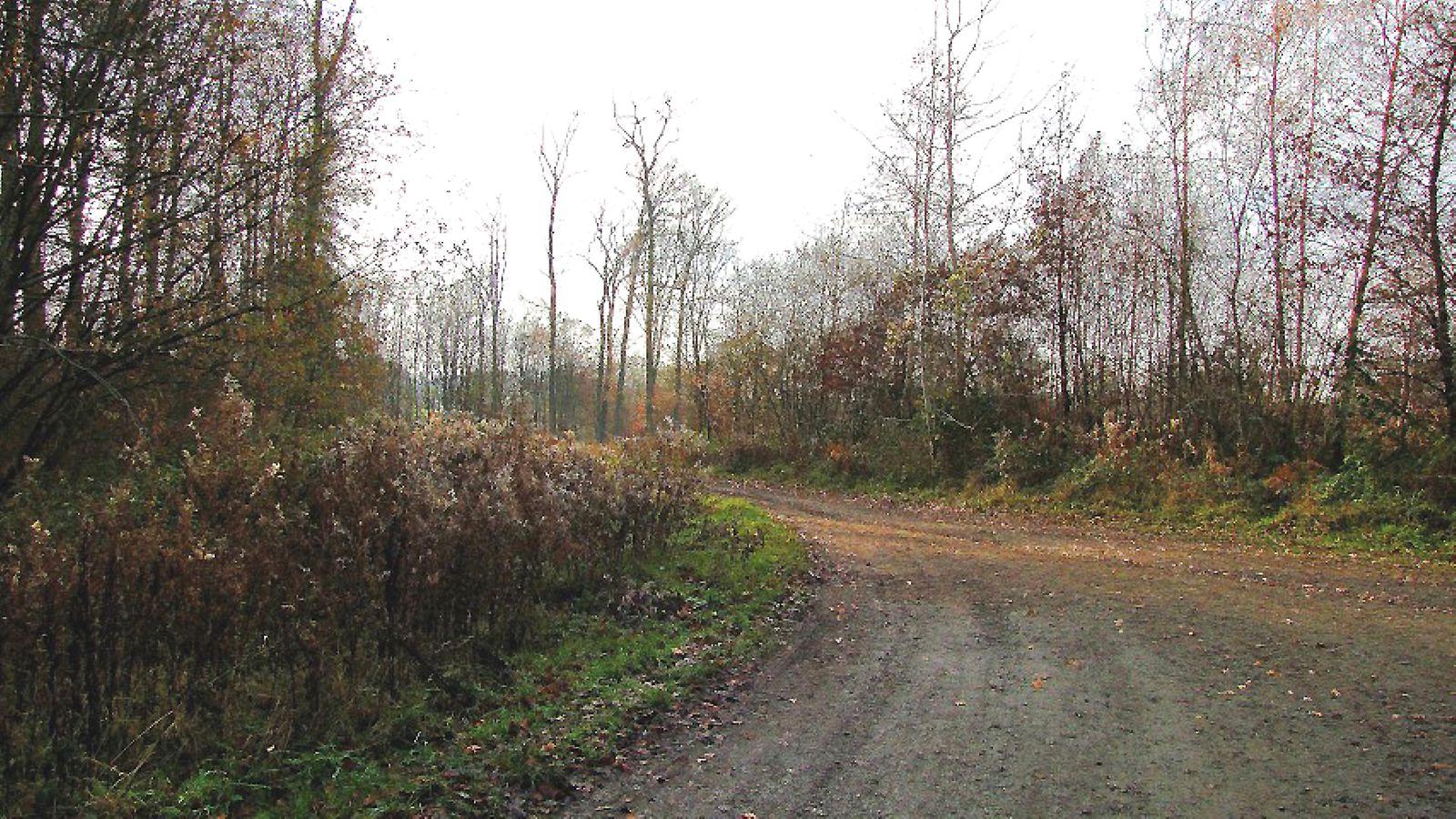 Pont 4_Chemin du Pommier Walleyrand_Laie du Bois Hariez