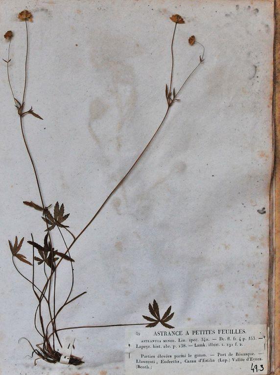 Reproduction Bm34 & Fcn , Université de Toulouse P.Sabatier, 2011