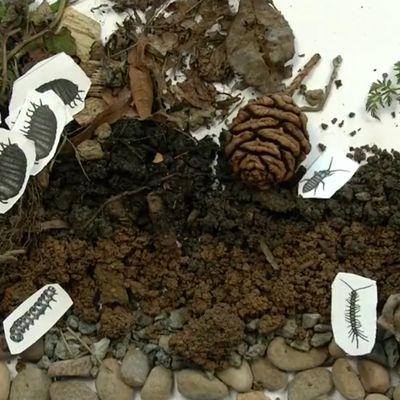 observatoire participatif de la biodiversité des sols dans les jardins