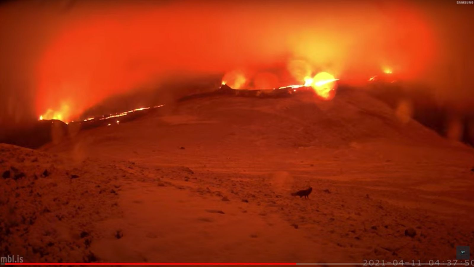 Reykjanes Peninsula - the 4 eruptive sites active on 04.11.2021 / 04:37 - mbls webcam - note the presence of a fox which remains at a distance from the lava - a click to enlarge