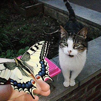 L'élevage de papillons <3