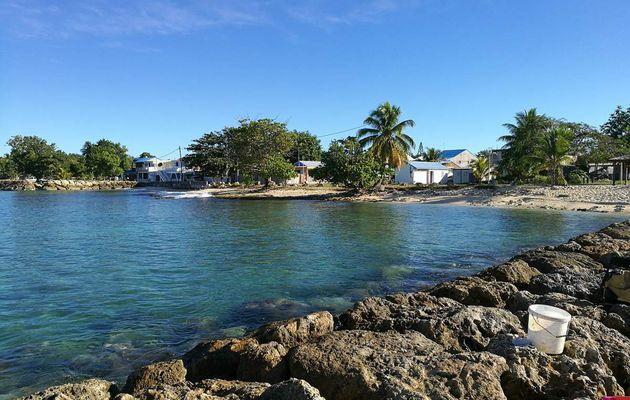 Compte rendu pêche à Port-Louis (Guadeloupe) mi janvier 2017