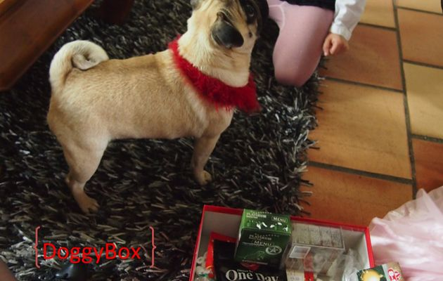 DoggyBox pour Fanny