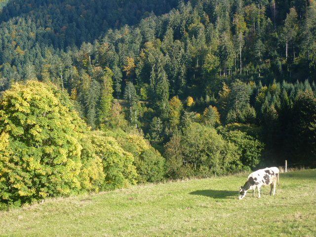 C'était le 4 octobre, le Schwarzwaldverein et le Club vosgien randonnaient ensemble dans le massif du Brézouard