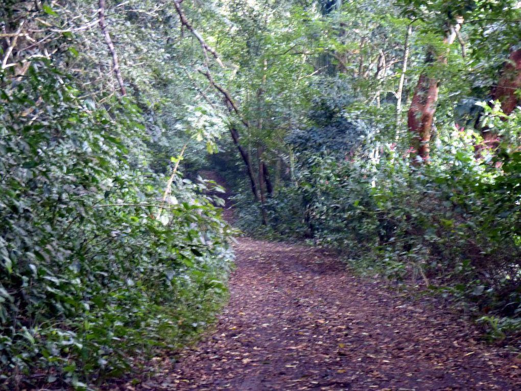 Xalapa - Catameco - Cascada Escondida