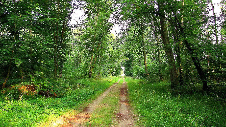 carrefour_Route de la Faisanderie_Route de la Tilloye