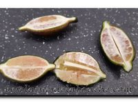 Panna cotta à la framboise et citron caviar