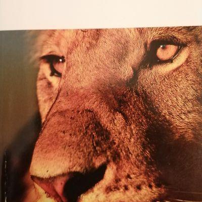 """Lecture Mars 2021 - """"Le Lion"""" de Joseph KESSEL"""
