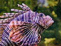 L'Aquarium du Limousin