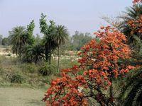 SHAJAHANPUR (Vallée du Gange)