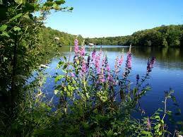 Communauté de Communes du Pays de Valois : Union des Amis du Parc Naturel Régional Oise Pays de France et de ses Trois Forêts AP3F  - BP 20343 – 60634 CHANTILLY Association N° W604000624