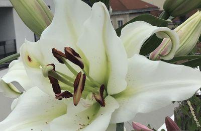 Les fleurs du mois de juillet, dans le micro jardin urbain