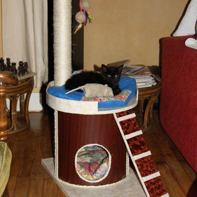 Arbre à chat .....la suite