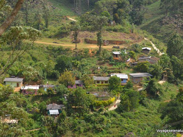 Randonnées dans les plantations de thé